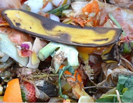 Die richtige Entsorgung von Bioabfall